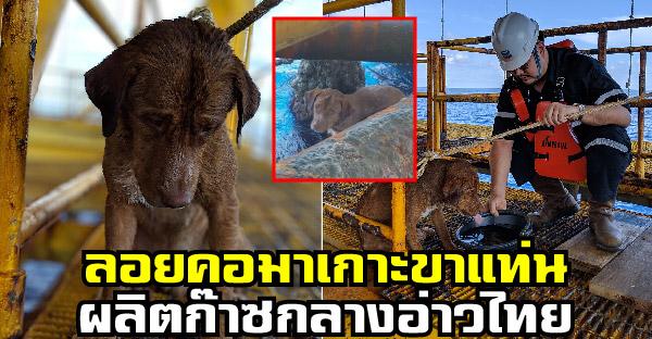 น้องหมาลอยคอกลางทะเล โชคดีว่ายมาเกาะขาเเท่นผลิตก๊าซกลางอ่าวไทย รอดชีวิตหวุดหวิด