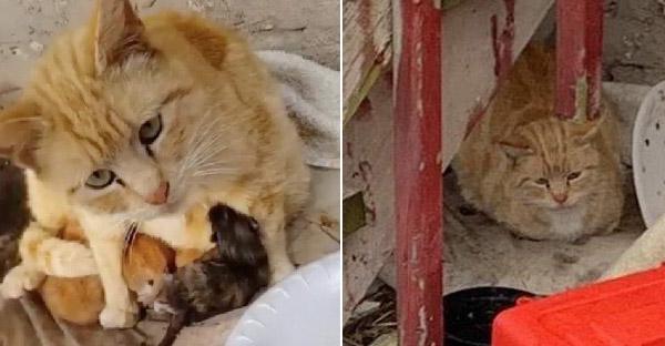 แม่แมวเอาตัวบังฝนให้ลูกๆอบอุ่น ก่อนที่จะมีคนใจดีมาช่วยชีวิตเอาไว้