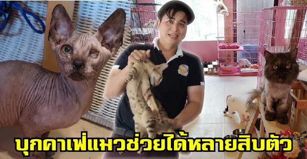 อาสากู้ภัยสัตว์และตำรวจตรวจค้นคาเฟ่แมวย่านวัชรพล พบแมวป่วยทิ้งไว้เพาะพันธุ์หลายสิบตัว