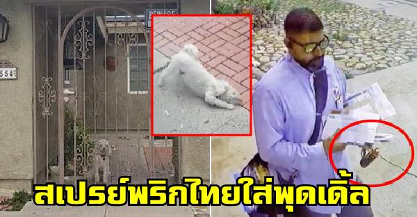 กล้องวงจรปิดจับภาพคนส่งจดหมาย ใช้สเปรย์พริกไทยใส่พุดเดิ้ลอย่างไร้เหตุผล