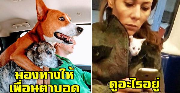 20 ความน่ารักปนเฮฮาของสัตว์โลก ที่โด่งดังบนโลกอินเตอร์เนต