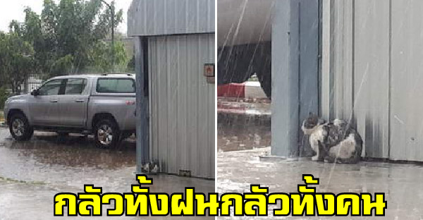 ชีวิตแมวจรกลัวทั้งฝนกลัวทั้งคน ชาวเนตพยายามแล้วแต่ช่วยไม่ได้จริงๆ