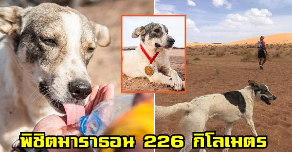 สุนัขร่วมวิ่งมาราธอนผ่านทะเลทรายไกลกว่า 226 กิโลเมตรสำเร็จเป็นตัวแรกของโลก