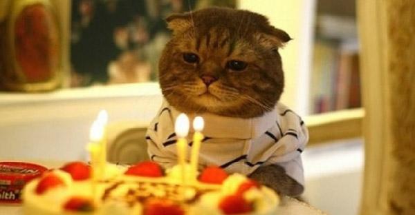 25 เหตุการณ์ที่พิสูจน์แล้วว่าแมวเป็นสิ่งมีชีวิต ที่ทำให้มนุษย์หลงรักได้เสมอ