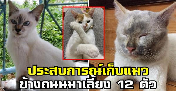 สาวเล่าชีวิตการเก็บแมวข้างถนนมาเลี้ยง 12 ตัว ไม่ใช่ว่ารวยแต่เพราะรักแมวมากจริงๆ
