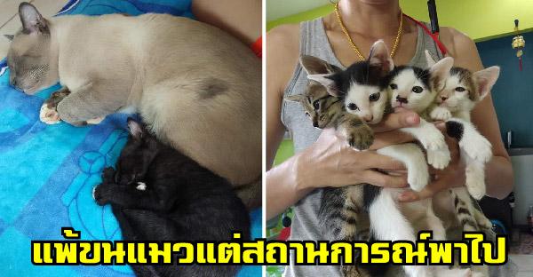 สาวแพ้ขนแมวจนชาตินี้ไม่เคยคิดจะเลี้ยง แต่สถานการณ์นำพาจนกลายเป็นทาสแมวในที่สุด