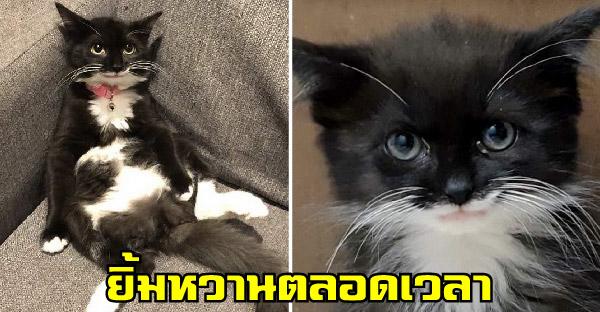 ลูกแมวยิ้มหวานถูกช่วยจากข้างถนน ก่อนคู่รักรับไปเลี้ยงโตขึ้นน่ารักไม่เหมือนใคร