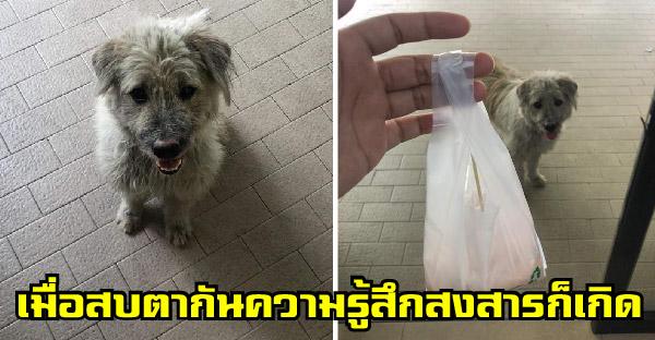 สาวเจอน้องหมาน่าสงสารหน้าเซเว่น จึงซื้อฟุตลองให้กิน สุดท้ายเพิ่งรู้ว่าเป็นลูกคนรวย