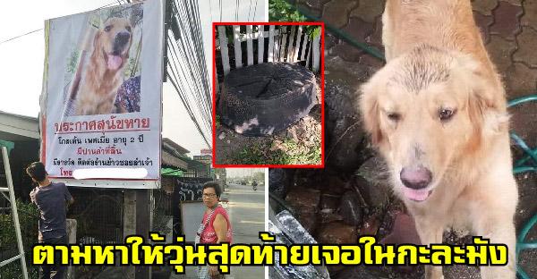 เจ้าของร้อนใจสุนัขหายตัวไป รีบขึ้นป้ายตามหา สุดท้ายเจอน้องแอบอยู่ในกะละมัง