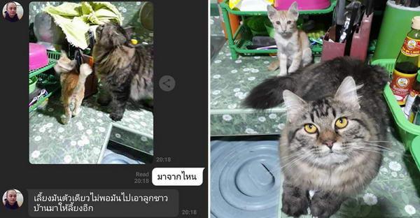 แมวที่บ้านหายตัวไปและพาลูกแมวปริศนากลับบ้านมาด้วย ส่วนทาสก็รับเลี้ยงไปตามระเบียบ