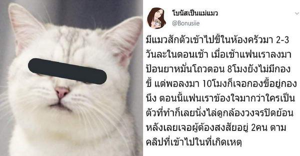 'โบนัสเป็นแม่แมว' ข้องใจใครทิ้งทุ่นในครัว จึงย้อนดูกล้องวงจรปิด ไล่สอบสวนกันอย่างฮา