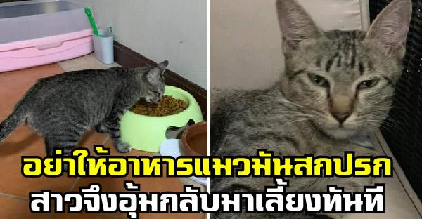 สาวอุ้มแมวจรกลับบ้านไปเลี้ยงทันที หลังได้ยินแม่ค้าส้มตำบอกอย่าให้อาหารมันสกปรก