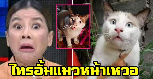 """รู้จักกับ """"ไทรอั้ม"""" แมวหน้าเหวอ ที่แฟนคลับถามหาเพราะความฮาล้วนๆ"""