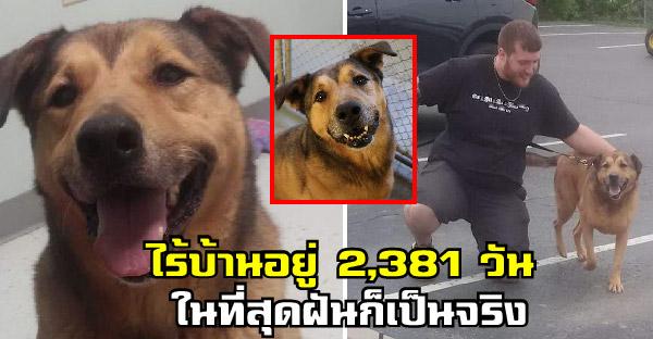 หมาไร้บ้านยิ้มไม่หุุบ หลังอยู่ในศูนย์พักพิงมานานหกปีครึ่ง จนในที่สุดก็สมหวัง