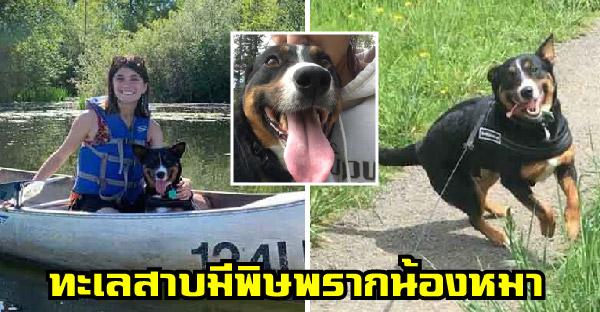 สาวเสียสุนัขที่รักแบบไม่มีวันหวนกลับ เพราะสาหร่ายเป็นพิษในทะเลสาบ
