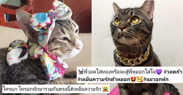 """เมื่อบรรดาทาสแมวลำไยความรักของ """"พี่หมอก"""" กับ """"แฟนต้า"""" งานนี้จึงฮากันสนั่นกลุ่มแมว"""
