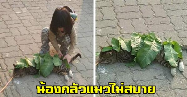 เด็กน้อยกลัวแมวจะไม่สบาย จึงเอาใบไม้มาห่มให้ด้วยความไร้เดียงสา