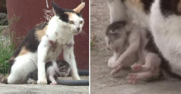 ชาวบ้านสุดสงสาร แม่แมวกับลูกน้อยติดอวนจับปลา ก่อนทีมกู้ภัยจะมาช่วยชีวิตเอาไว้