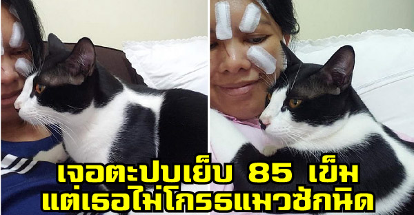 สาวถูกแมวที่เลี้ยงตะปบเย็บ 85 เข็ม แต่เธอกลับไม่โกรธและบอกว่าเป็นความผิดของเธอเอง