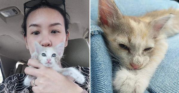 คู่รักช่วยลูกแมวข้างถนน ก่อนมันจะวิ่งหนีไป แต่ชะตาฟ้าลิขิตให้หาน้องเจออีกครั้ง