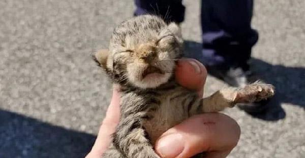 แม่แมวคาบลูกกระโดดหนีจากช่องเก็บของรถบรรทุก แต่ยังมีพี่น้องของมันติดอยู่และพลเมืองดีก็ช่วยเอาไว้ได้