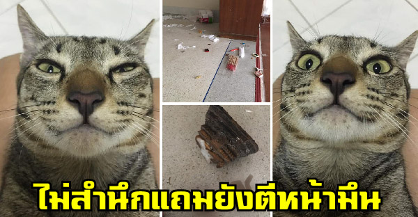 เปิดหน้าตัวการทำบ้านเละเทะ ไม่สำนึกแถมยังตีหน้ามึน ทำบรรดาทาสแมวฮาได้อีก