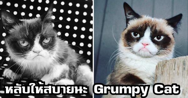 แมวหน้าบึ้ง Grumpy Cat จากโลกนี้ไปอย่างสงบ ด้วยวัยเพียง 7 ปี