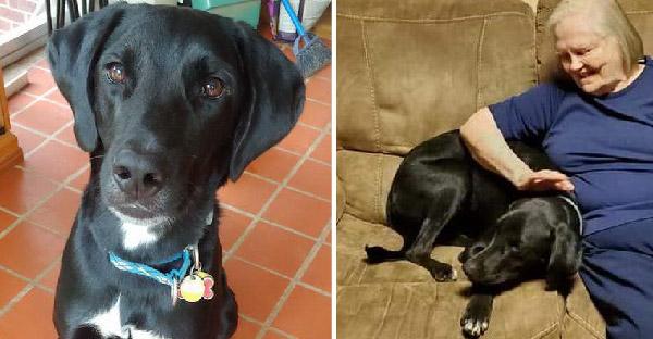 คุณยายไม่เคยชอบหมาที่บ้าน จนกระทั่งมันช่วยชีวิตของเธอเอาไว้