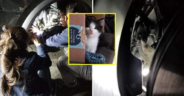หน่วยกู้ภัยกับร้านขายรถยอมถอดล้อรถเทสล่า เพื่อช่วยลูกแมวจรที่ไม่มีคนสนใจ