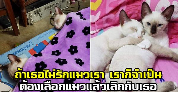 นี่แหละวิถีทาสแมว สาวบอกแฟนถ้าเธอไม่รักแมวเรา เราก็จำเป็นต้องเลือกแมวแล้วเลิกกับเธอ