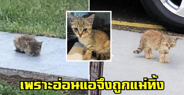 ลูกแมวนอนสิ้นหวังเพราะถูกแม่ทิ้ง กระทั่งสาวใจดีมาช่วยเปลี่ยนชีวิตให้สดใสอีกครั้ง