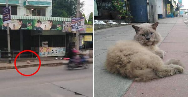 น้องแมวหิวโซหนังหุ้มกระดูก ชาวเนตอยากยื่นมือเข้าช่วย แต่มีคนบอกว่ามีเจ้าของแล้ว