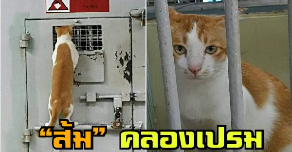 """เรื่องเล่าของ """"ส้มคลองเปรม"""" แมวจรขวัญใจผู้คุม ที่ยึดเรือนจำเป็นอาณาเขตของตัวเอง"""