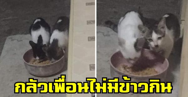 หนุ่มสงสัยแมวกินข้าวเหลือทั้งๆที่ปกติกินจุมาก ก่อนจะรู้ว่าเหลือให้เพื่อนที่เป็นแมวจรแถวบ้าน