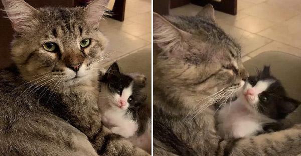ลุงแมวคอยช่วยปกป้องลูกแมวตัวน้อย ที่ต้องการความช่วยเหลือจากข้างถนน