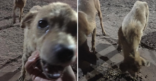 หมาจรจัดน้ำตาไหลพราก หลังได้รับอาหารจากสาวใจดีที่มาช่วยเหลือ