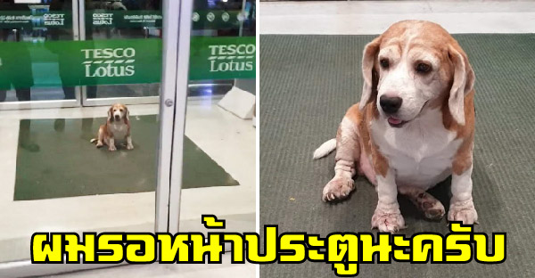 น้องหมามารยาทงาม นั่งรอเจ้าของไปช๊อปในห้าง โดยมีพี่ รปภ. คอยเฝ้าดูแลอย่างดี