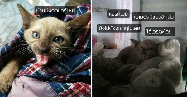 ลูกแมวร้องโวยวายหลังหนุ่มช่วยชีวิตก่อนน้ำท่วม จนถูกจับใส่แคปชั่นอย่างฮา