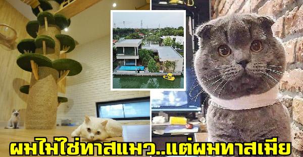 หนุ่มบอกเขาไม่ใช่ทาสแมว แต่กลับสร้างห้องแมวอย่างอลังการ เพราะเขาเป็นทาสเมียที่เป็นทาสแมว