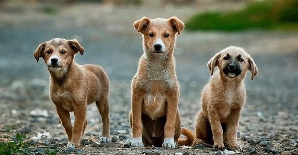 ความสำเร็จของฮอลแลนด์ ที่จัดการปัญหาเรื่องสุนัขจรจัดเป็นศูนย์ โดยไม่ต้อง Set Zero