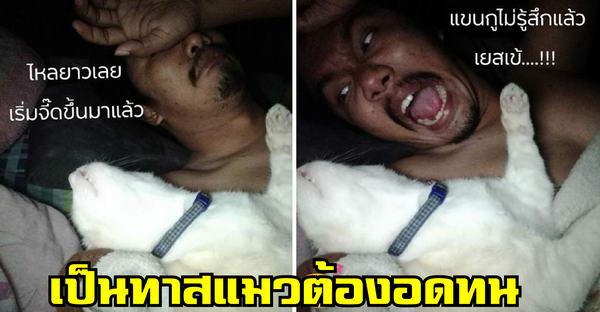 เมื่อเจ้าเหมียวคึกตอนตี 3 กว่าทาสจะกล่อมนอนได้ แถมเจอนอนทับแขนเหน็บกินไปอีก