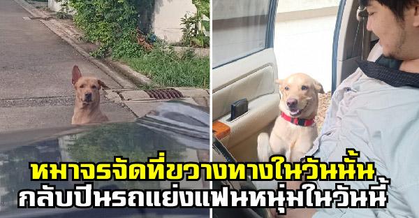 เมื่อหมาจรจัดที่ยืนขวางทางในอดีต กลับปีนรถแย่งแฟนหนุ่มพร้อมโปรยยิ้มหว่านเสน่ห์ให้