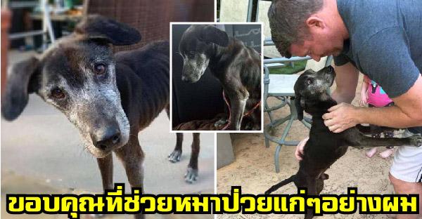 สุนัขแก่และป่วยรอวันสุดท้ายของชีวิต แต่ผู้ช่วยชีวิตไม่ยอมแพ้ทำทุกวิถีทาง จนกลับมาเริ่มต้นใหม่ได้อีกครั้ง