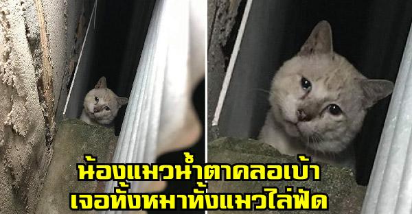 น้องแมวน้ำตาคลอเบ้า เจอทั้งหมาทั้งแมวเจ้าถิ่นไล่ฟัด หวังแค่ใครซักคนมาช่วยมันไว้