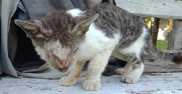 สาวปกป้องลูกแมวข้างบ้านที่ตาบอดสนิท แต่ได้แค่เพียงให้อาหารไปวันๆเท่านั้น