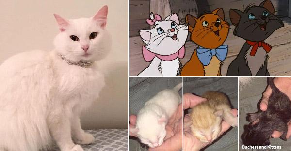 แม่แมวคลอดลูกสามตัวสามสี เหมือนการ์ตูนเรื่องแมวเหมียวพเนจรโดยบังเอิญแต่แบบว่าเป๊ะมาก
