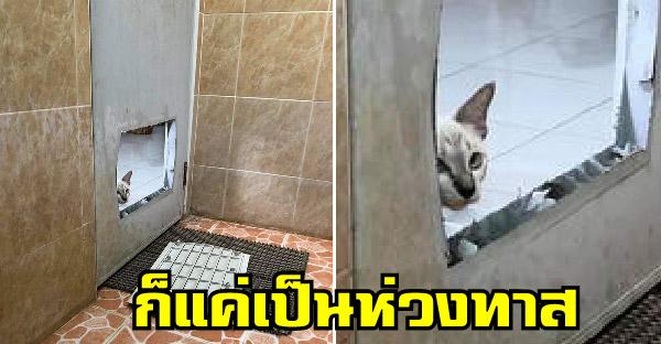 เหมียวคิดถึงทาสจ๋า ถึงขั้นพังประตูห้องน้ำ ส่วนทาสได้แต่ตะโกนว่าอย่าเข้ามา
