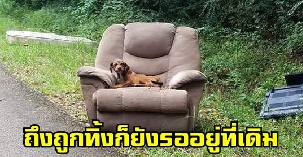 น้องหมาถูกทิ้งข้างถนนพร้อมของใช้ในบ้าน รอเจ้าของกลับมารับไม่ยอมไปไหน