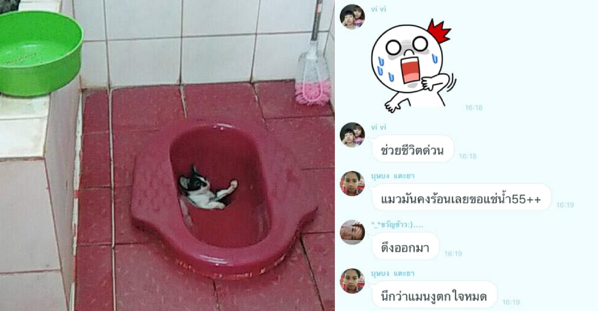ลูกแมวพลาดตกส้วมหลุมประหนึ่งแช่ออนเซ็น แต่ชาวเนตมองต่างมุมบอกอันตรายไม่น้อย