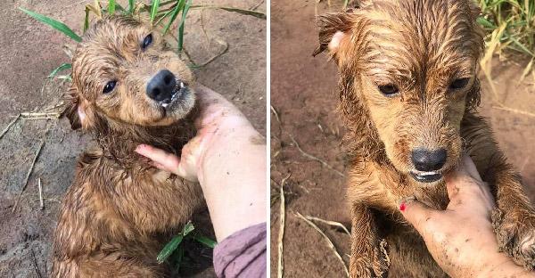 สาวบนสิ่งศักดิ์สิทธิ์ขอให้เจอน้องหมาที่หายไป ก่อนจะเจอในป่าอ้อยข้างบ้านที่หามาแล้วเป็นสิบรอบ